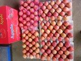 감미롭고 파삭파삭한 빨간 FUJI Apple