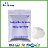 乳酸桿菌のPlantarum Probioticsの食餌療法の栄養物の補足Nutraceuticals