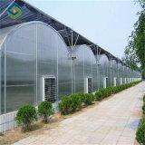 De goedkope Multivan Agricultureal van de Spanwijdte Serre van het PC- Blad