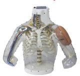 X-YH 1013電子上椀の筋肉内注入モデル