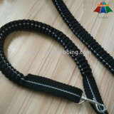 Factory Direct Hot Sale Bungee Dog Lead, mains libres Running Dog Leash