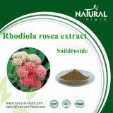 Extrato Saildroside 1%-10% de Rhodiola Rosea