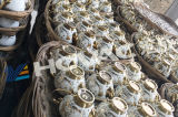 Керамическая лакировочная машина золота покрытия Equipment/PVD Tableware PVD