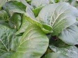 Unigrow 토양 조절기로 잎 식물성 설치