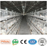 Cage de poulet de viande avec le treillis métallique et la bonne qualité et le prix (un type)