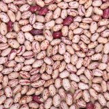 2012 New Beans Cultivo renales