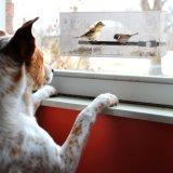 De nieuwste Voeder van de Vogel van het Venster met de Sterke Zuignappen & Gaten van het Afvoerkanaal