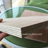 Face à l'Eucalyptus Bintangor Okoume/Core de contreplaqué de feuillus