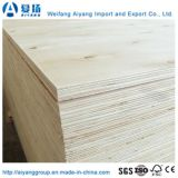 Cheapest Price Unbleached Poplar Veneer Faced Plywood