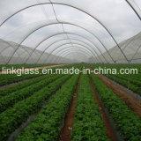 Effet de serre de légumes nouveaux PE chiffon pare-soleil Net avec UV (YHZ-SDN05)