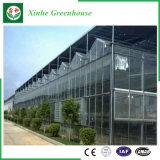 Invernadero de cristal del fabricante de Muti- del sistema hidropónico chino del palmo para la agricultura