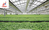 Пленка для выбросов парниковых газов зеленого высевающего аппарата