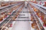 De automatische Apparatuur van het Systeem van de Riem van de Verwijdering van de Mest van de Kip voor een Kooi van de Kip van de Laag van het Type