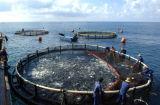 Cercle de la pêche de l'aquaculture cages flottantes