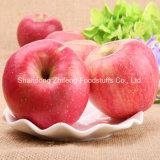 2015 de Nieuwe Verse Appel FUJI van het Fruit
