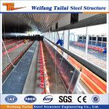 Camera di pollo prefabbricata della struttura del blocco per grafici d'acciaio di basso costo nelle aziende avicole