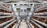 최신 판매 최신 담궈진 직류 전기를 통한 층 닭 감금소
