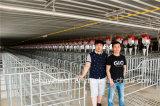 L'acier galvanisé de porc pour la vente de la Caisse de farrowing