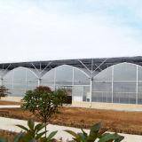 큰 농업 온실 그리스 물자 플레스틱 필름 최신 판매