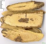 Glycyrrhetinic Zuur: 98%, 99% door HPLC
