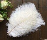 空想は人工的なバルクだちょうの羽の総合的なだちょうの羽を着色する