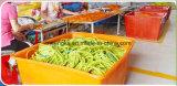 Außendurchmesser 5mm und Gummi Tubenatural Latex-Gefäß-Fabrik Identifikation-2mm