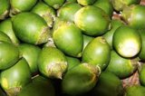 Extrait naturel de fruits d'olive avec de l'acide maslinique