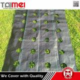 Stuoia tessuta pp nera e verde del rifornimento della fabbrica della Cina del Weed