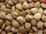 감미로운 Almond (youyi 780-800 PCS/500g)