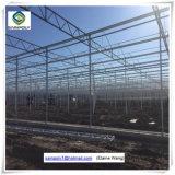 Serre chaude hydroponique de feuille de PC d'usine de la Chine pour la tomate