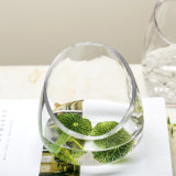 De in het groot Transparante Vaas van /Flower van de Vaas van het Glas van het Kristal