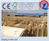Pegamento E2 de la madera contrachapada del álamo F/B Bingtangor de la base