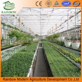 Verwendeter Polycarbonat-Gewächshaus-Handelsverkauf für Tomate