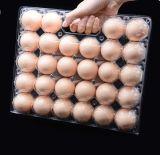 Nuevo diseño de embalaje caja de huevos de gallina 28 celdas con asa