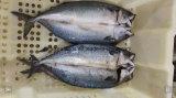 6-8 PCS/Kg gefrorene Fisch-Makrele