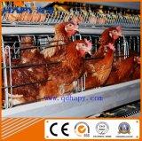 Gaiola da galinha na casa das aves domésticas com estilo de H e um estilo