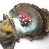 Ostra de perla criada redonda de Akoya del agua salada 6-8m m floja empaquetada al vacío