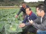 野菜に植わることのUnigrowの生物有機肥料