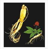 Extracto del Ginseng 20 (s) - Protopanaxadiol CAS No.: 30636-90-9