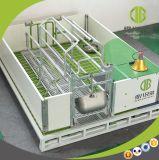 중국제 공급자 돼지 농장 새끼를 낳는 크레이트 디자인