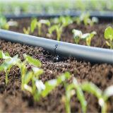 Tubo rotondo in-linea di irrigazione goccia a goccia del dispositivo di gocciolamento del tubo di plastica del gocciolamento della serra