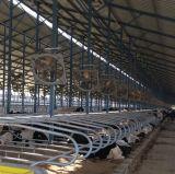 牛ベッドの酪農場の挿入装置