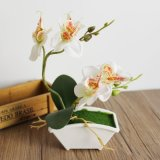 Phalaenopsis СТИЛЬ БОНСАЙ искусственные цветы Искусственные растения
