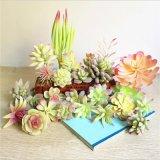 Семьи подарок оформление искусственных Succulents растений