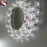 Blanc pur 5630 Bande LED (KS-661C)