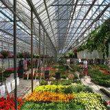 Estufa avançada da flor e do vegetal com sistema refrigerando e os painéis solares