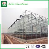 Agriculture/tente en verre commerciale avec le système de refroidissement