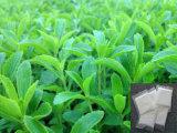 Estratto /Rebaudiosides a di Stevia per gli alimenti e le bevande