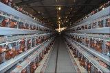 يشبع آليّة بيضة دجاجة قفص تجهيز لأنّ عمليّة بيع