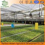 Легко Установленная Многопролетная Стеклянная Теплица / Стеклянная Сельскохозяйственная Теплица Большого Размера